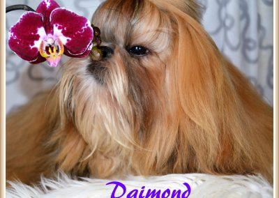 New_Image_daimond